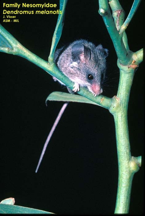 Front view of mouse sitting on branch