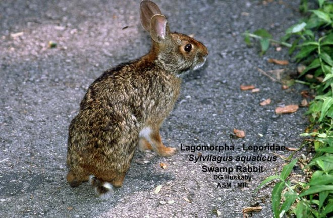 Quartering a rabbit related keywords amp suggestions quartering a