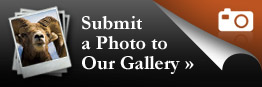 Submit a Photo to Our Gallery